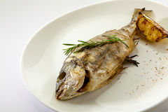 Grilled dorado fish Royalty Free Stock Images