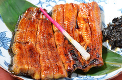 Grilled eels royalty free stock image