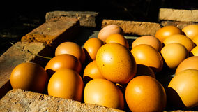 Grilled eggs on the hot brick for sale in the local market Royalty Free Stock Photo