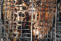 Grilled fish stock photos