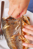 Grilled fish. Royalty Free Stock Photo