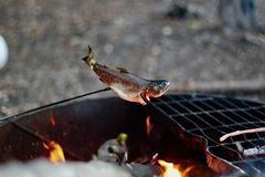 Grilled fish camping grill trout fish stock photography