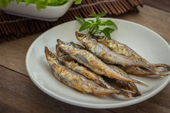 Grilled fish capelin or shishamo on plate Royalty Free Stock Image