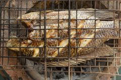 Grilled fish grilled on charcoal grate. royalty free stock images