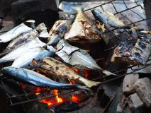 Grilled fish on charcoal stove Stock Photos