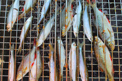 Grilled fish of common bleak and ruud Stock Photography