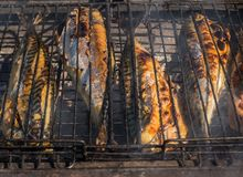 Grilled fish. Cooking fish on the barbecue grid. Grilled fish. Cooking fish on the barbecue grid stock images