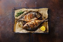 Grilled Fish Dorado on metal grill grid. With lemon and rosemary on dark background Royalty Free Stock Photography