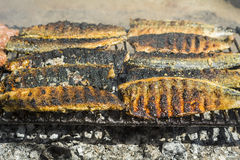 Grilled fish fillet Royalty Free Stock Photography