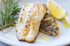 Grilled Fish Fillet Royalty Free Stock Photos