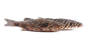 Grilled fish. Stock Images
