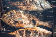 Grilled fish with lemon on the grid Barbeque in the garden in summer.  Royalty Free Stock Photo
