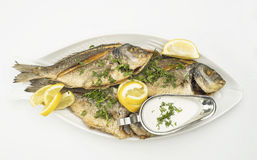 Grilled Fish with Lemon Slices, Grilled seafood served on plate isolated on white Royalty Free Stock Photography