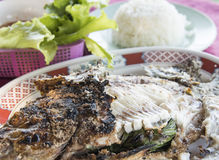 Grilled fish Royalty Free Stock Photo