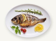 Fish dish isolated on white background. Grilled fish on plate isolated on white background. Cutout and mockup for restaurant menu, top view Royalty Free Stock Photo