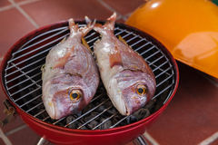 Grilled fish. Grilled rose gilt head on a barbecue royalty free stock photo