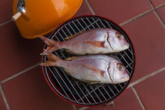 Grilled fish. Grilled rose gilt head on a barbecue Royalty Free Stock Image