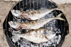 Grilled fish Stock Image