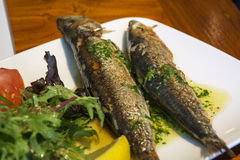 Grilled fish on the white plate with verdancy Royalty Free Stock Photos