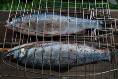 Grilled fish. Whole fish ready for the cooking on grill Royalty Free Stock Photo