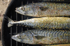 Grilled fishes background Royalty Free Stock Photography