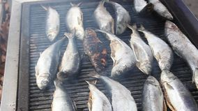 Grilled fishes stock footage