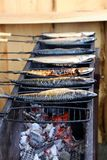 Grilled fishes Royalty Free Stock Photos