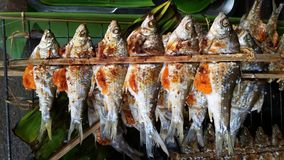 Grilled fishs. A colorful of a fish family Stock Photos