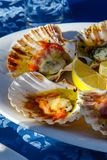 Grilled Fresh Scallop on Shell and lemon on the plate closeup royalty free stock image