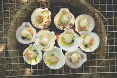 Grilled fresh scallops Royalty Free Stock Image