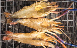 Grilled Giant River shrimp. On wood plates ,River prawn grilled on charcoal stove Stock Images
