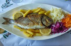 Grilled Gilt-head Beam fish. Served at an restaurant in Saranda coastal city, Albania, delicious, seafood, gilthead, healthy, lemon, mediterranean, fresh stock photos