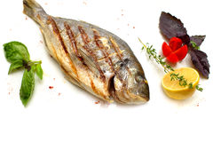 Grilled Gilt-head bream Royalty Free Stock Image