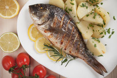 Grilled gilt-head bream fish Stock Image