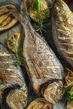 Healthy grilled Fish meal with vegetables stock photography