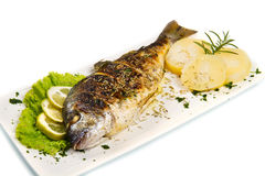 Grilled gilt head sea bream on plate with lemon and rosemary and. A Grilled gilt head sea bream on plate with lemon and rosemary and potatoes Royalty Free Stock Image