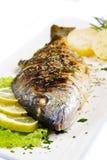Grilled gilt head sea bream Stock Photos