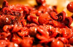 Grilled glazed octopus dish, Asian snack Royalty Free Stock Photography