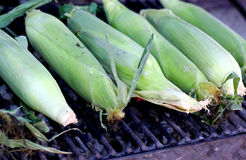 Grilled green maize corncobs for sale on the street. Stock Images