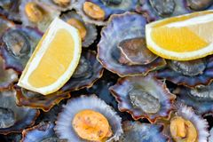Grilled Limpets. Traditional Madeira Island dish: Grilled Limpets with lemon slices Royalty Free Stock Photography
