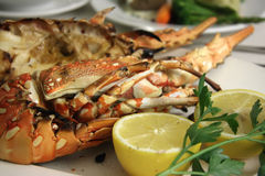 Grilled lobster Stock Images