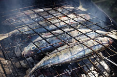 Grilled Mackerel Royalty Free Stock Photo