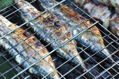 Grilled Mackerel Fish, DOF Stock Photos
