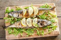 Grilled mackerel with fresh arugula Royalty Free Stock Photo