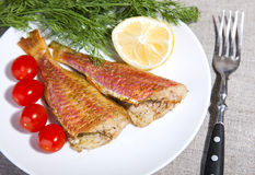 Grilled Mediterranean red mullet fish Stock Photos