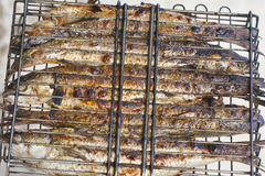 Grilled mullet closeup Royalty Free Stock Photo