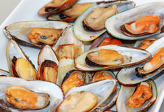 Grilled Mussels. A plate of open shell grilled mussels royalty free stock photo