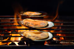 Grilled mussels. Grilled newzealand mussels on flames Royalty Free Stock Photo