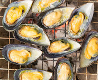 Grilled New Zealand mussels Royalty Free Stock Photo