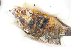 Grilled nile tilapia fish Royalty Free Stock Images